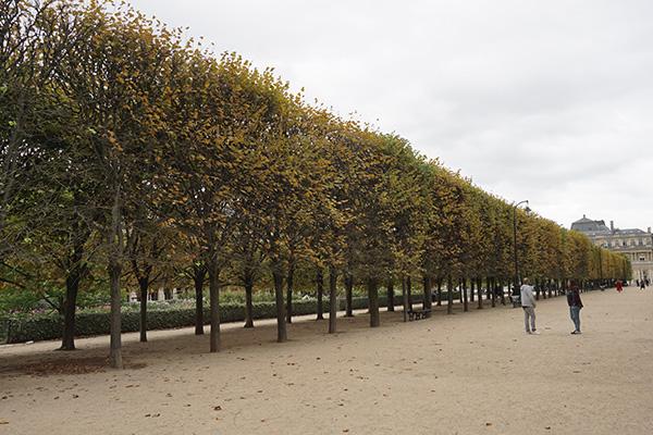 フランスパレ・ロワイヤルの並木道