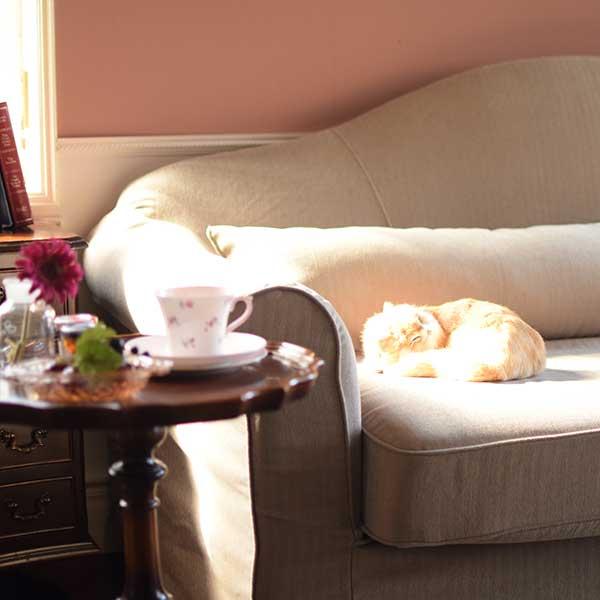 猫と過ごすリビングソファ