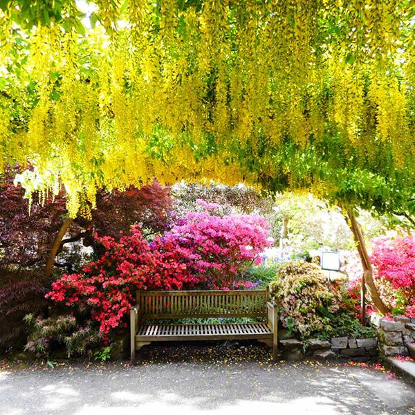 英国のお庭、ボドナント・ガーデン