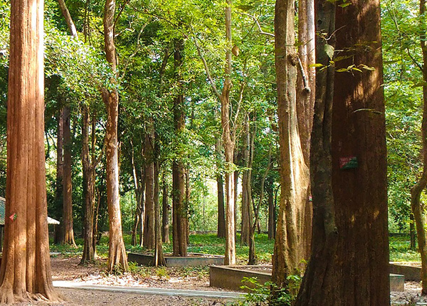 チークの森林